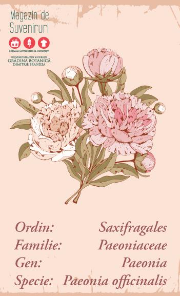 shop-botanica-branding-by-rawideas